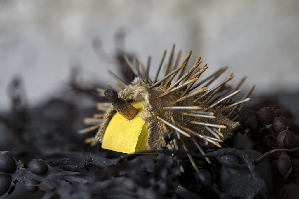 Hedgehog on Seaweed